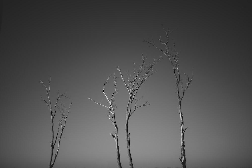 leafless tree on gray field