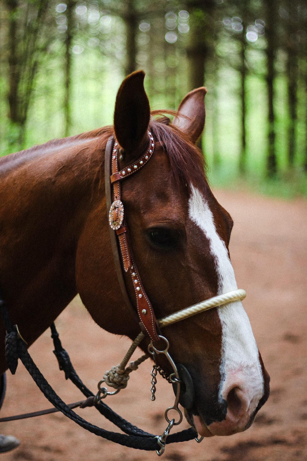 brown and white horse with brown leather strap