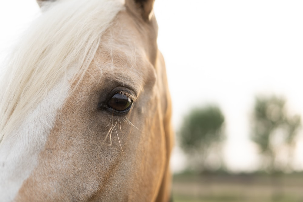 white horse in close up photography
