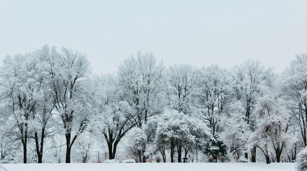 trees covered with snow under white sky during daytime