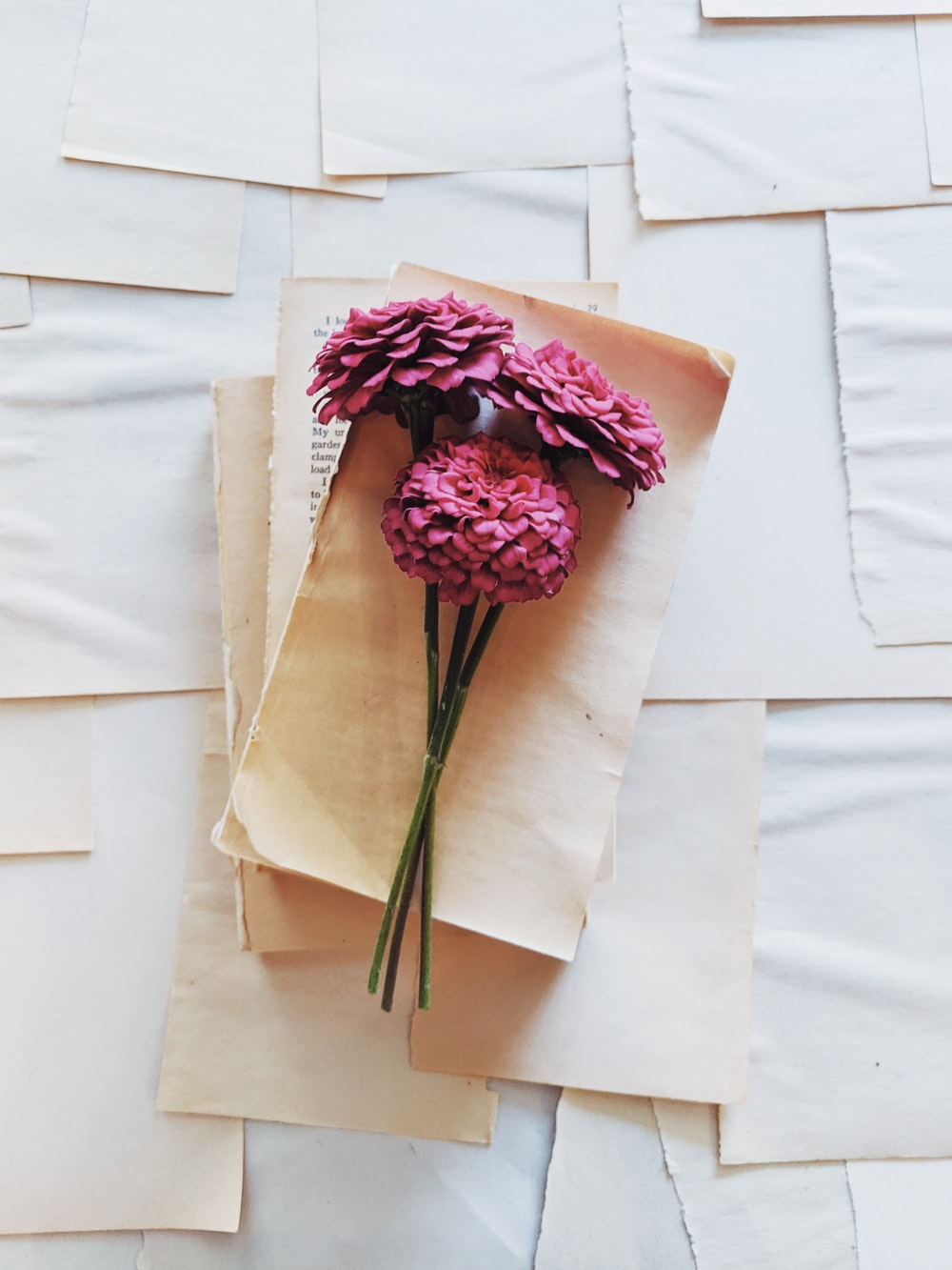 pink flower on white paper