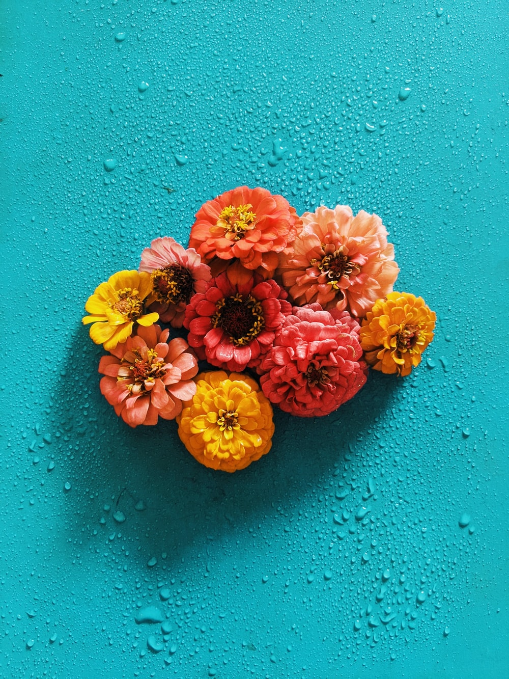 orange and yellow flowers on blue surface