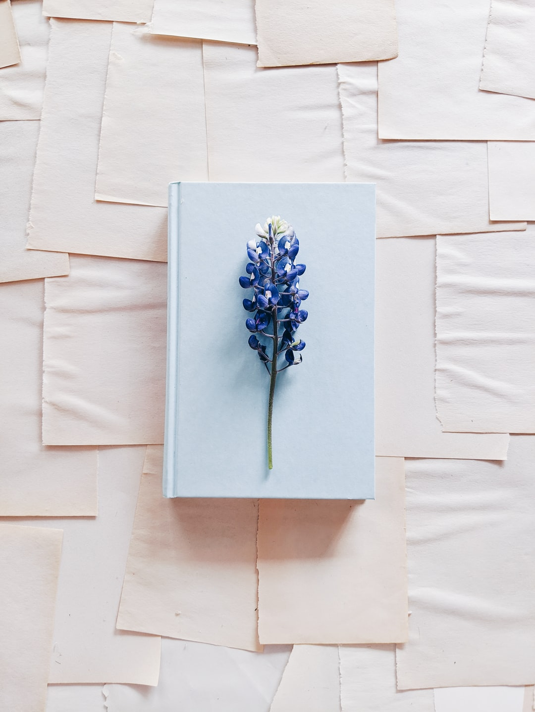 A single bluebonnet on a light blue book.