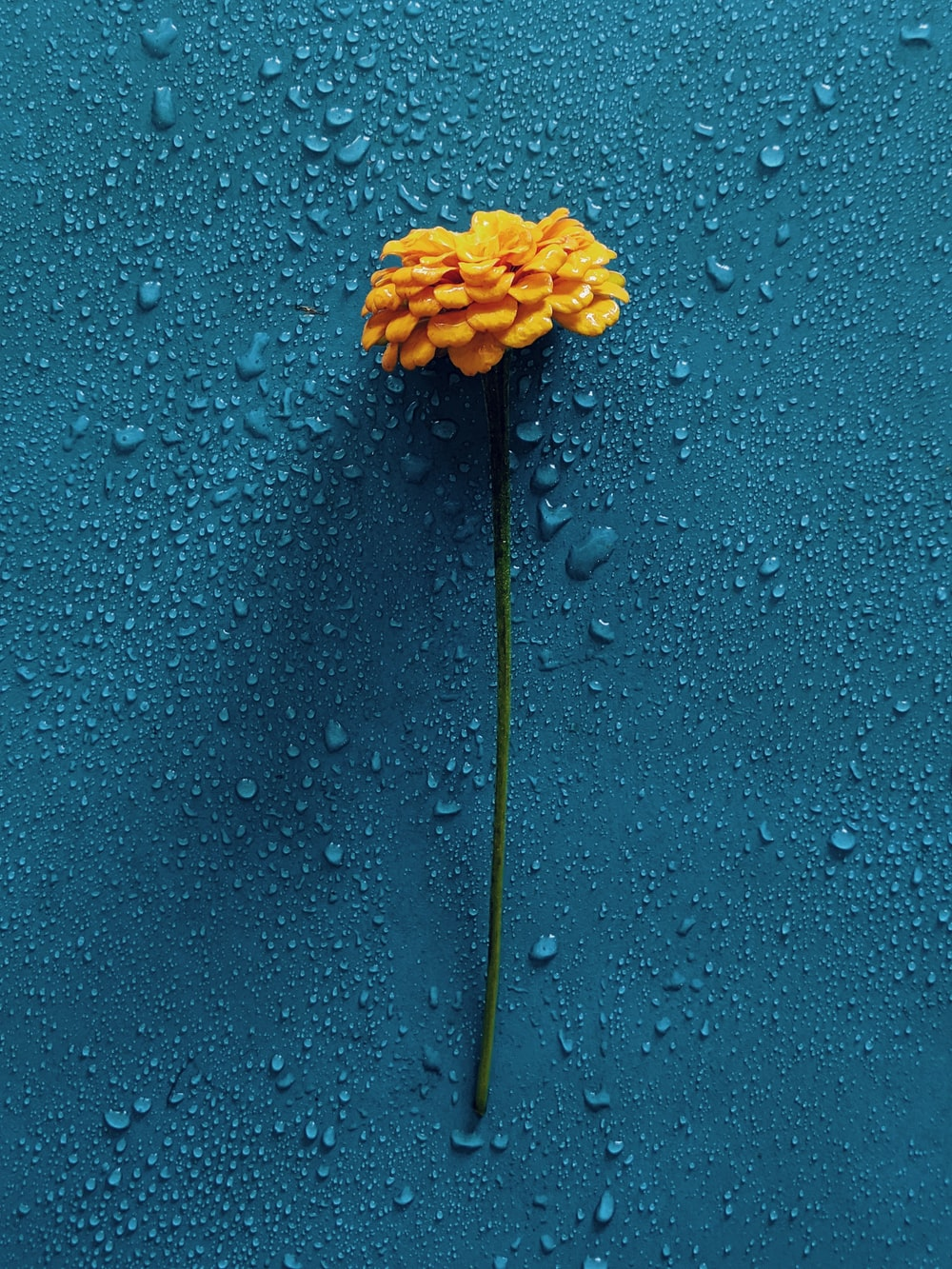 yellow flower on blue surface
