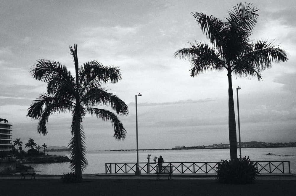 grayscale photo of palm trees near body of water