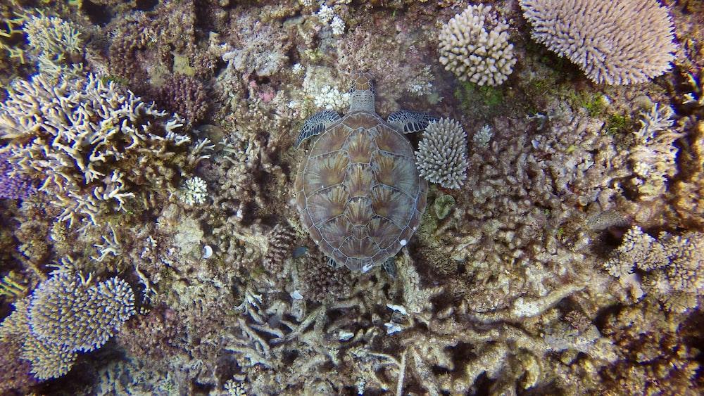 brown and black turtle on brown coral reef