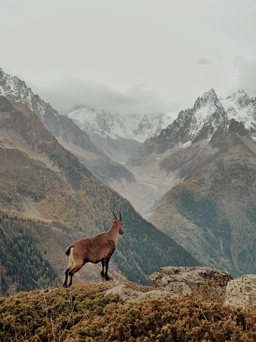 brown deer on mountain during daytime