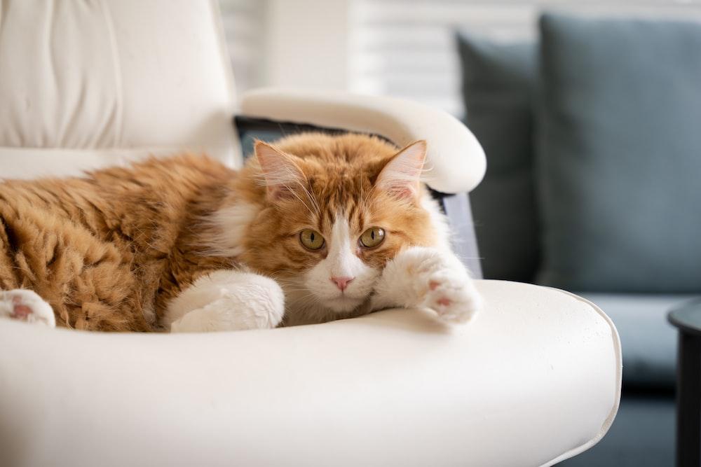 orange tabby cat lying on white chair