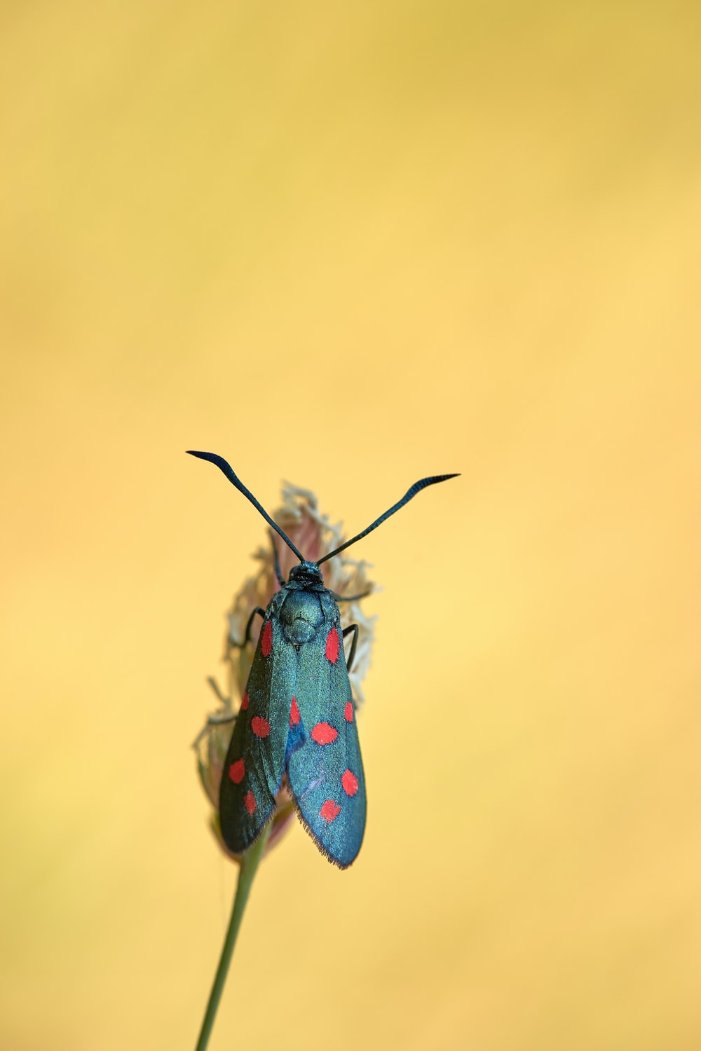 red and black insect in close up photography