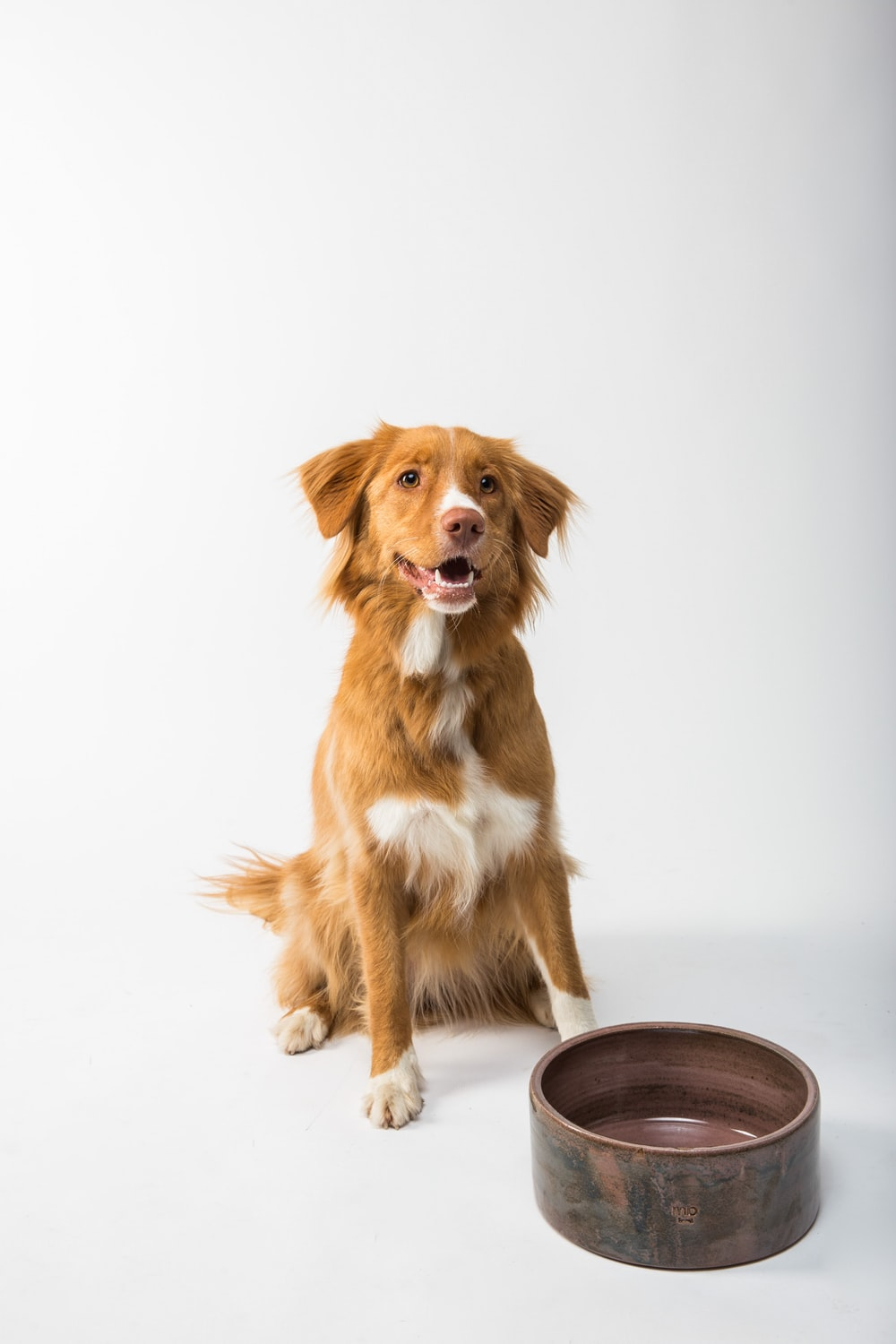 brown and white long coated dog sitting on brown wooden round table