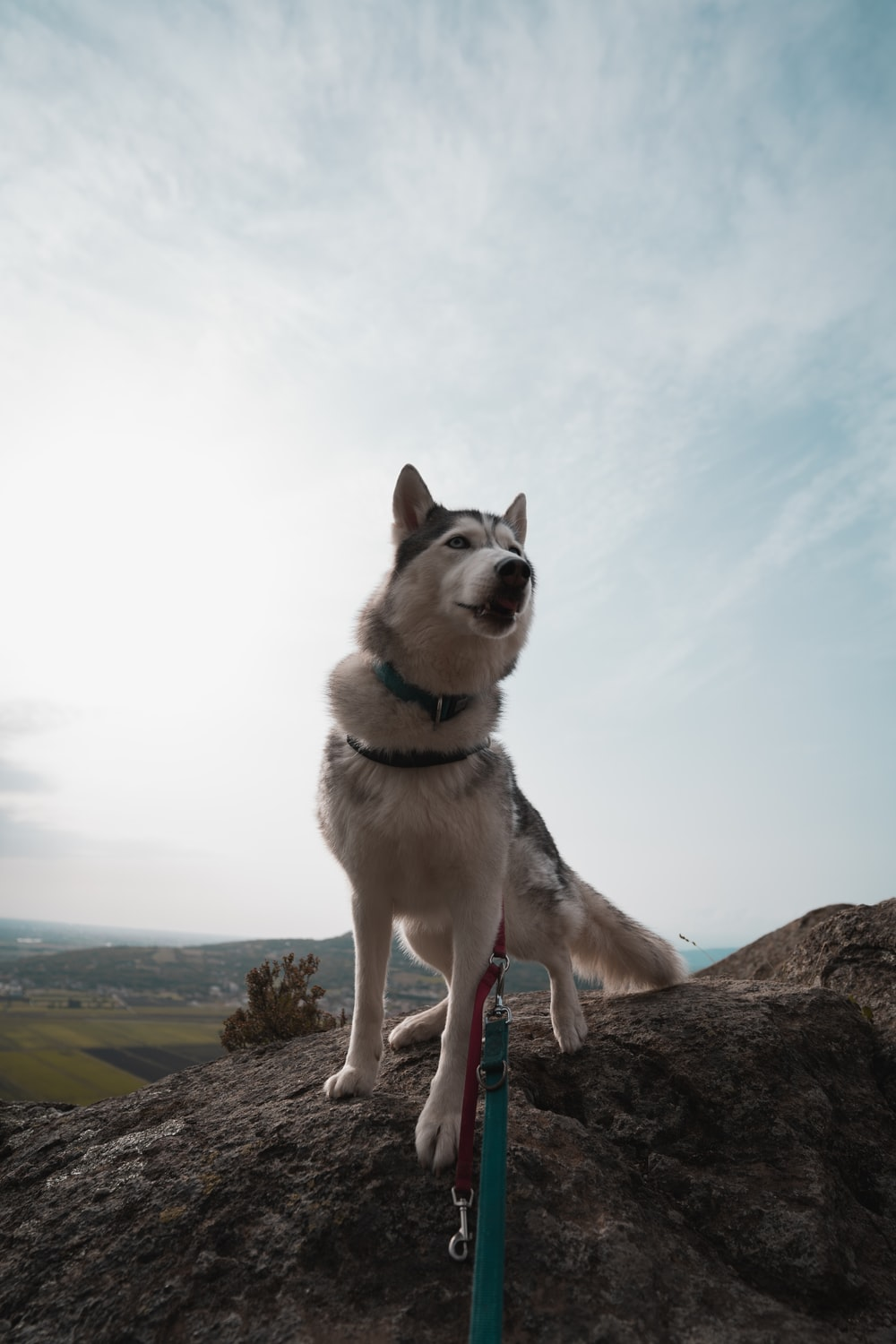 white and black siberian husky on brown rock during daytime