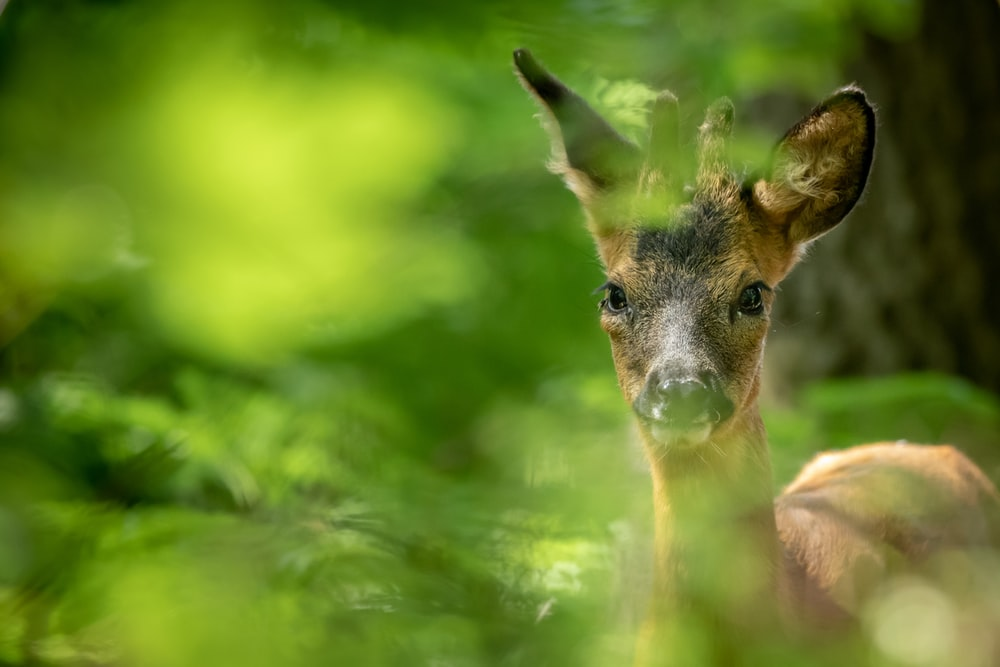 brown deer in green grass during daytime