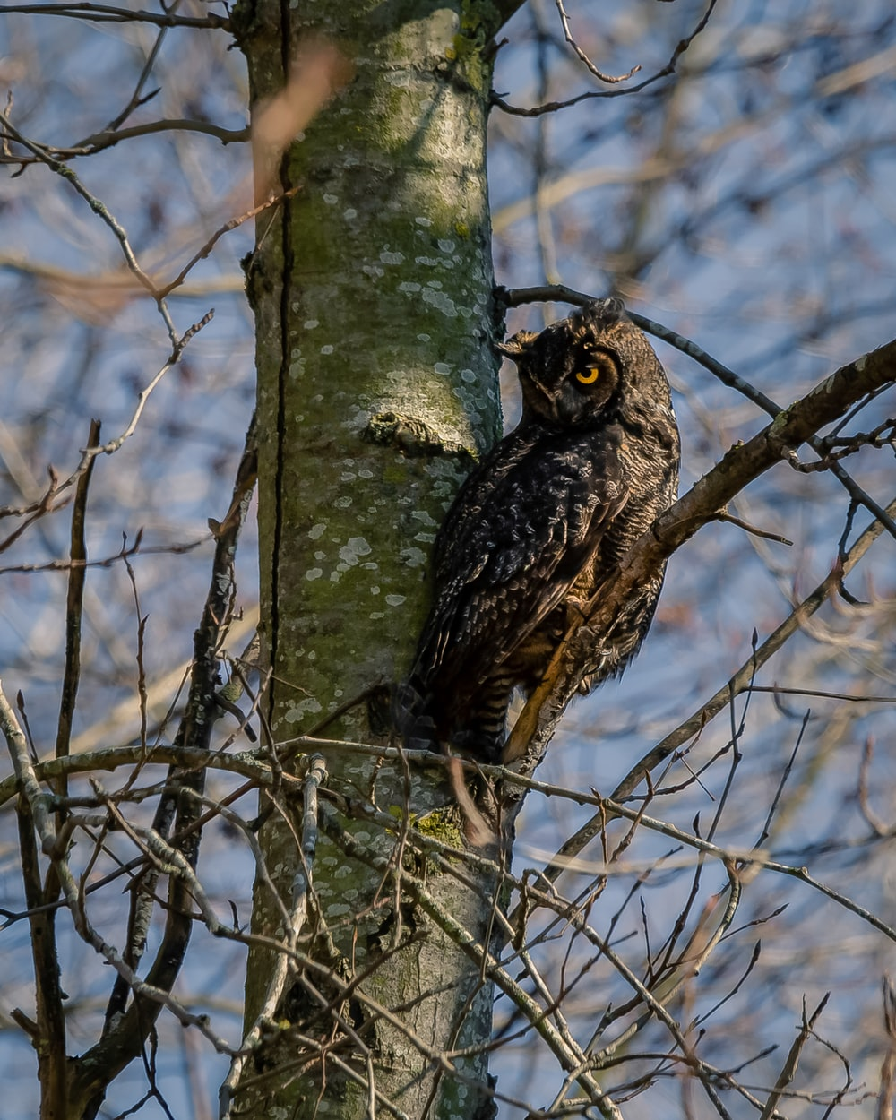 black and white owl on brown tree branch during daytime