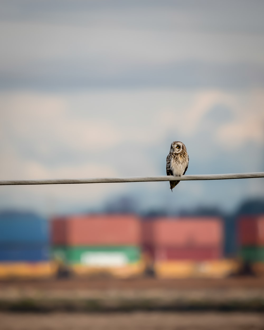 brown and white bird on black wire during daytime