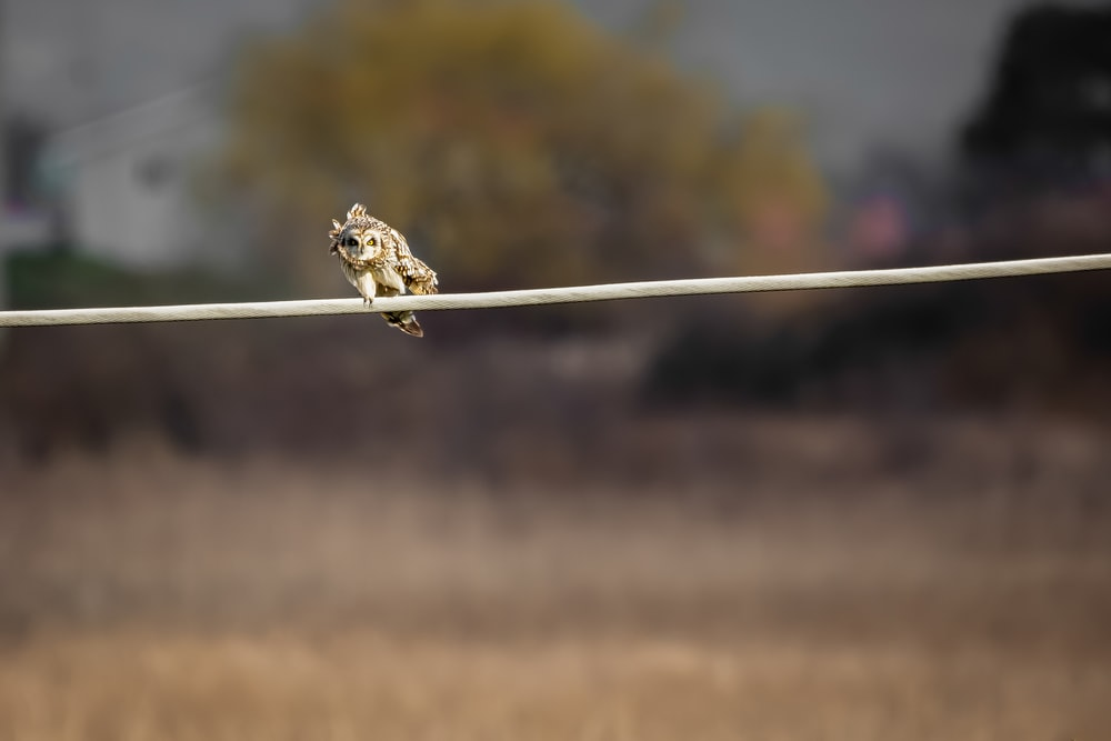 brown owl on white wire during daytime