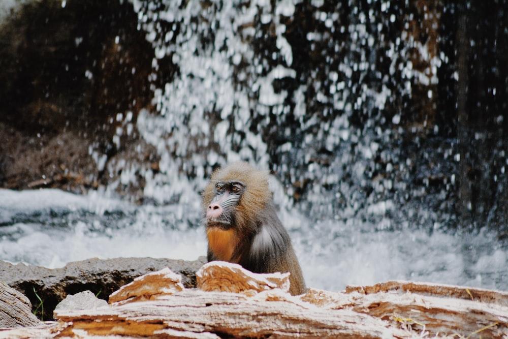 brown monkey sitting on brown rock during daytime