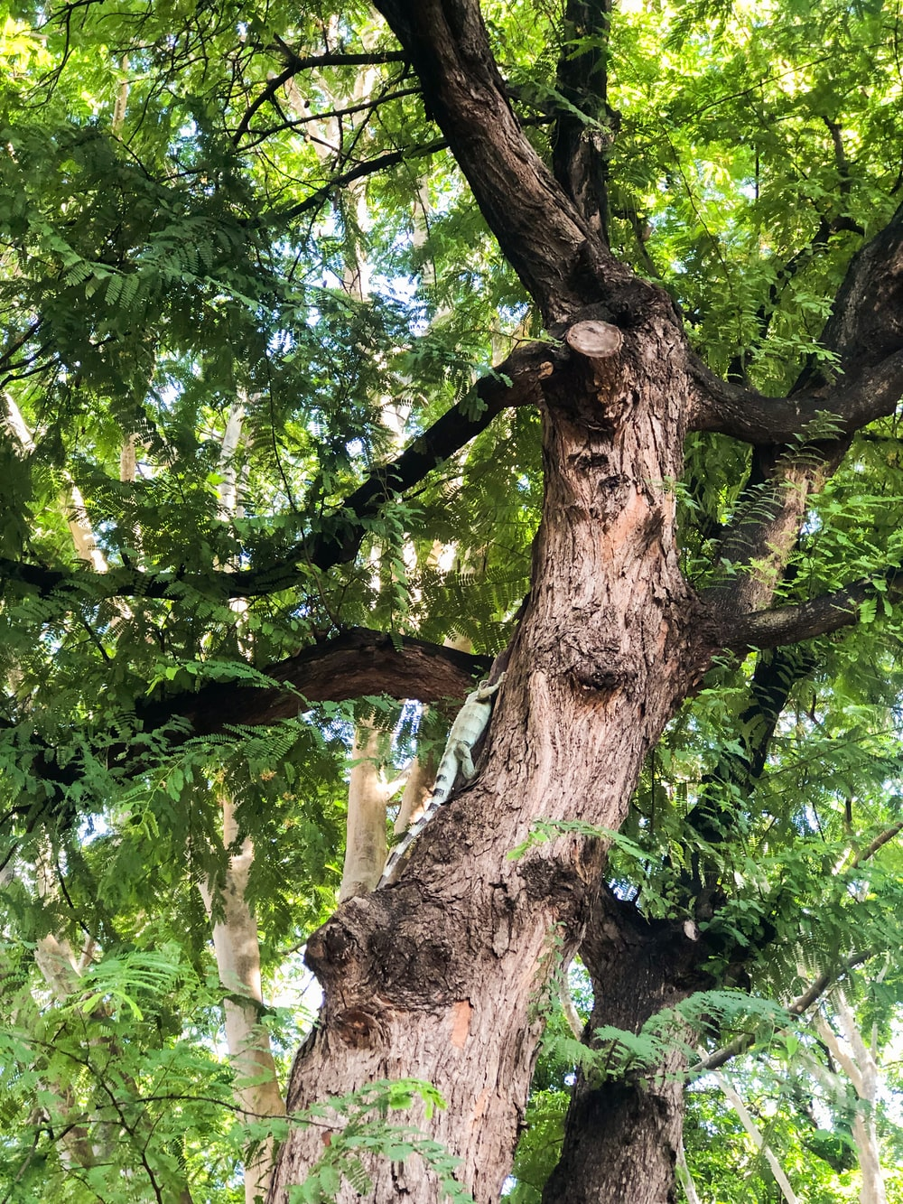 green tree with brown trunk