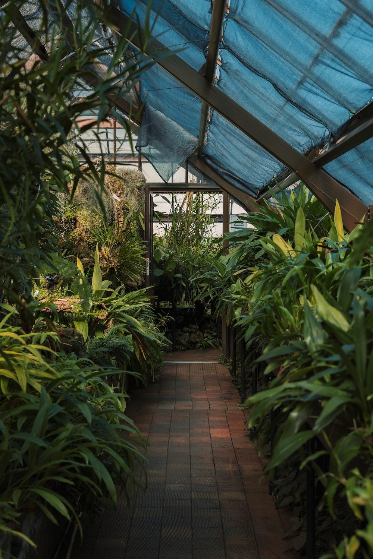 green plants on green plants