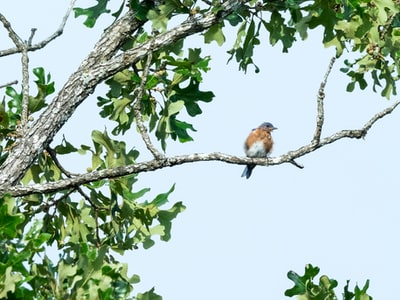 brown and white bird on tree branch during daytime missouri teams background