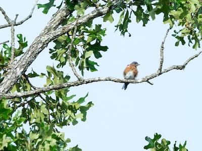 brown and white bird on tree branch during daytime missouri zoom background