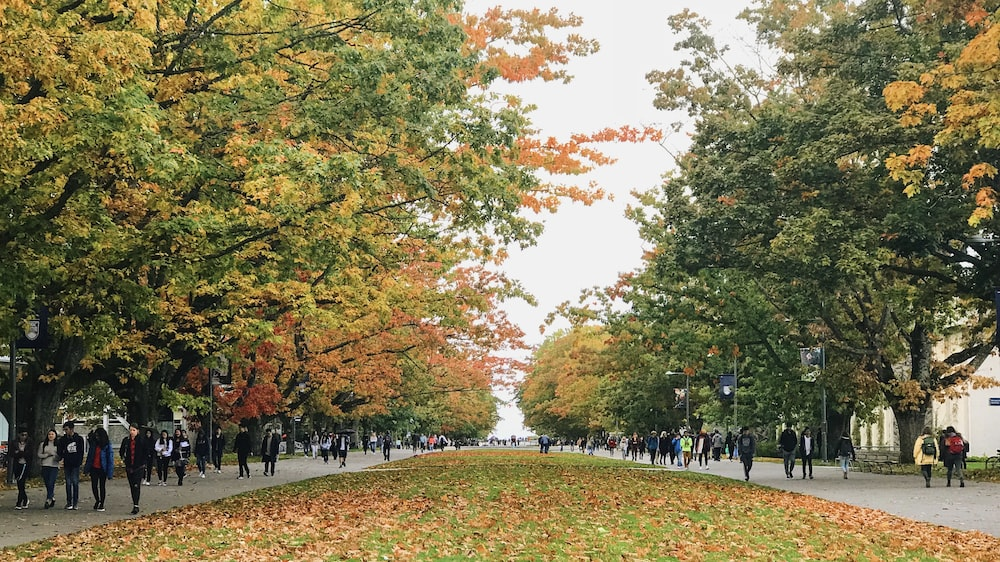 people walking on park with trees during daytime