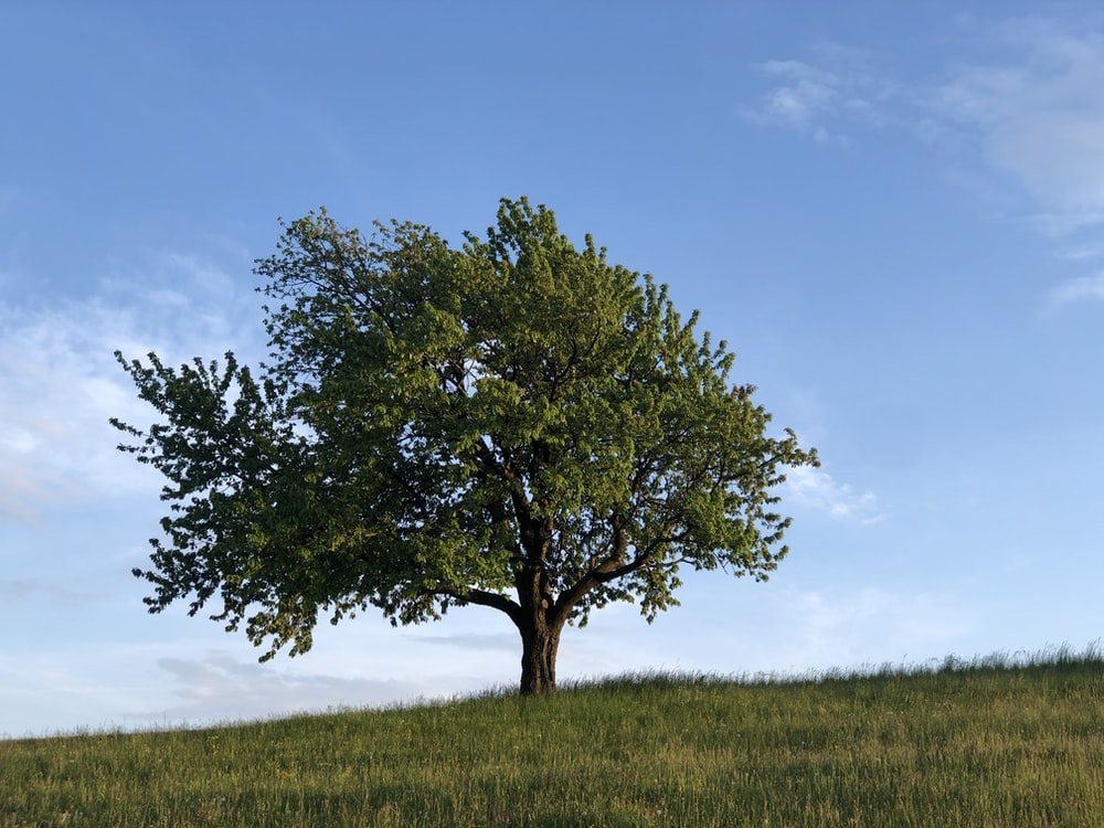 green tree on green grass field under blue sky during daytime