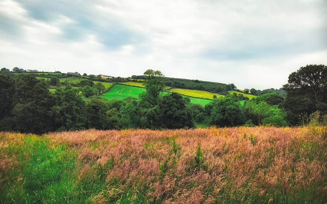 The Norn Irish countryside in all of its summer glory (Jun., 2019).