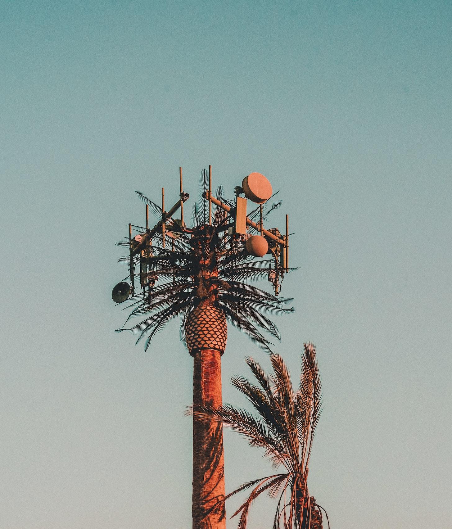palma pełna od sprzętu 5G