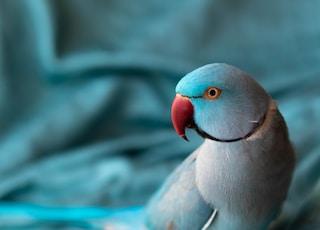 gray and white bird on gray textile