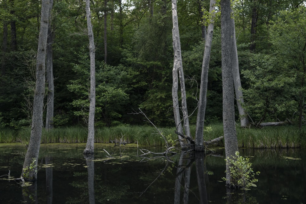 brown tree on body of water during daytime