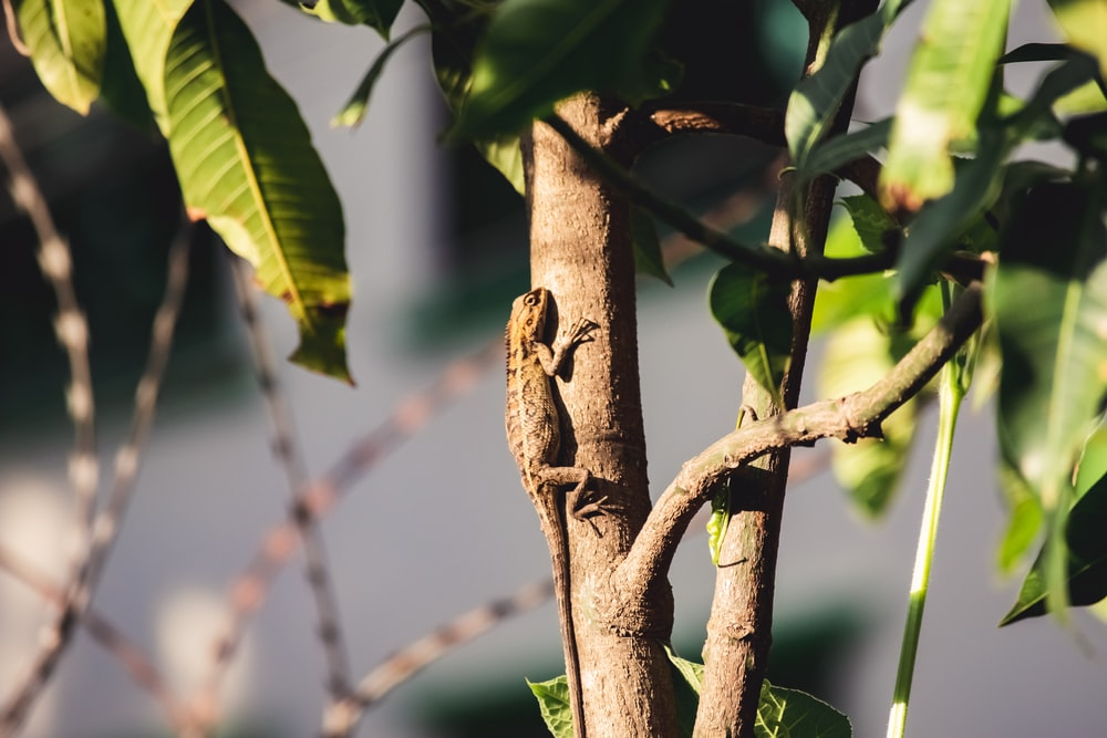 brown lizard on brown tree branch during daytime