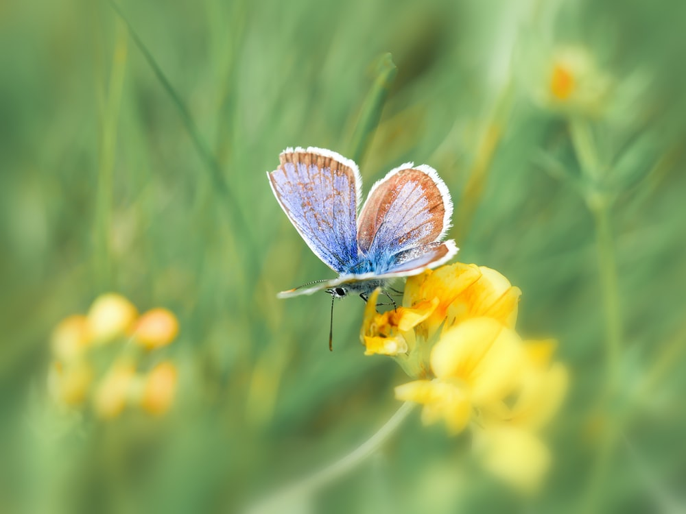 blue and white butterfly perched on yellow flower in close up photography during daytime