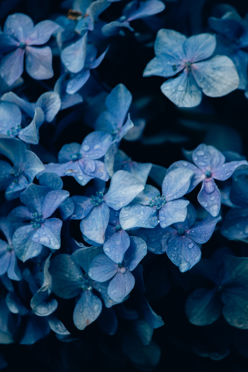 purple leaves in close up photography