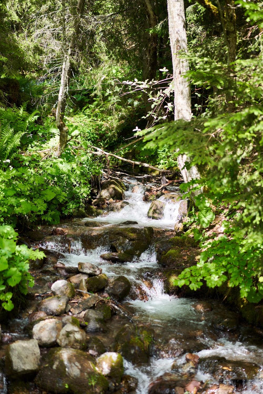 green moss on rocks in river