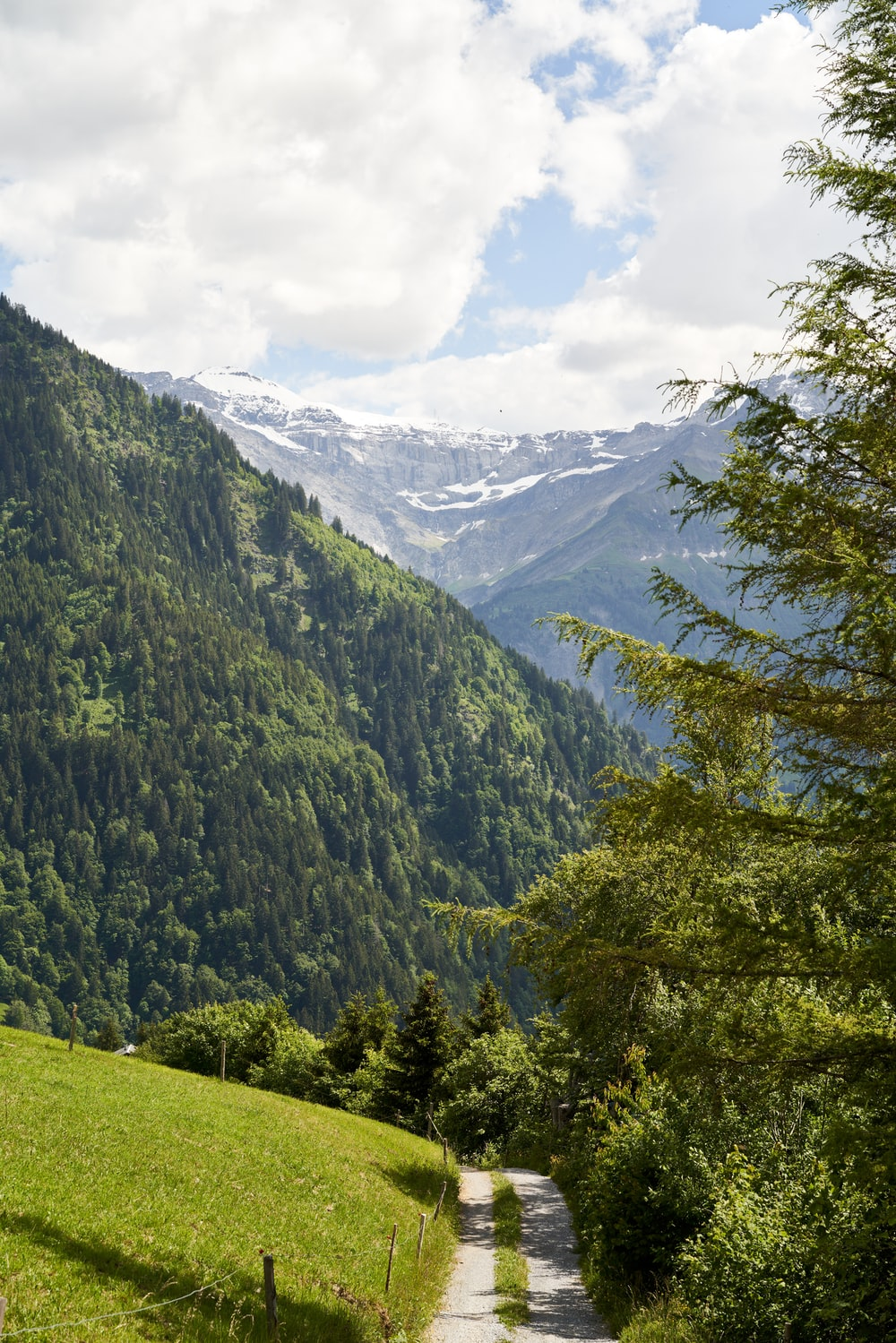 green trees on green grass field near mountain during daytime