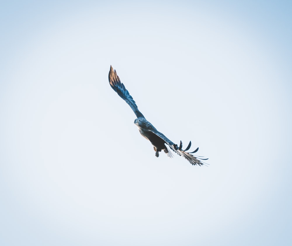 blue and black bird flying