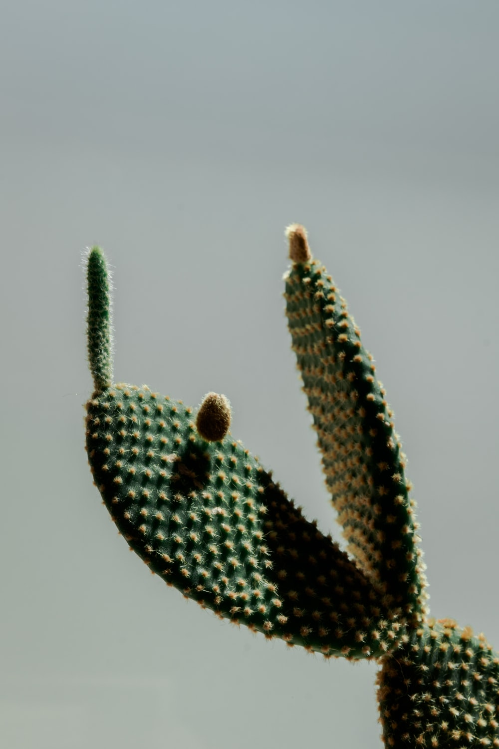 green and brown cactus plant
