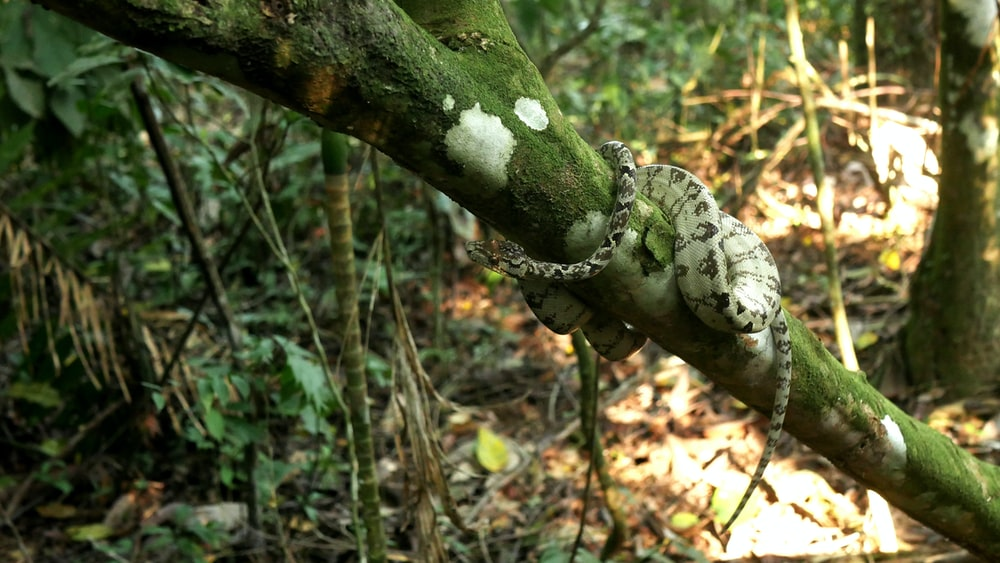 green and white crocodile on tree branch