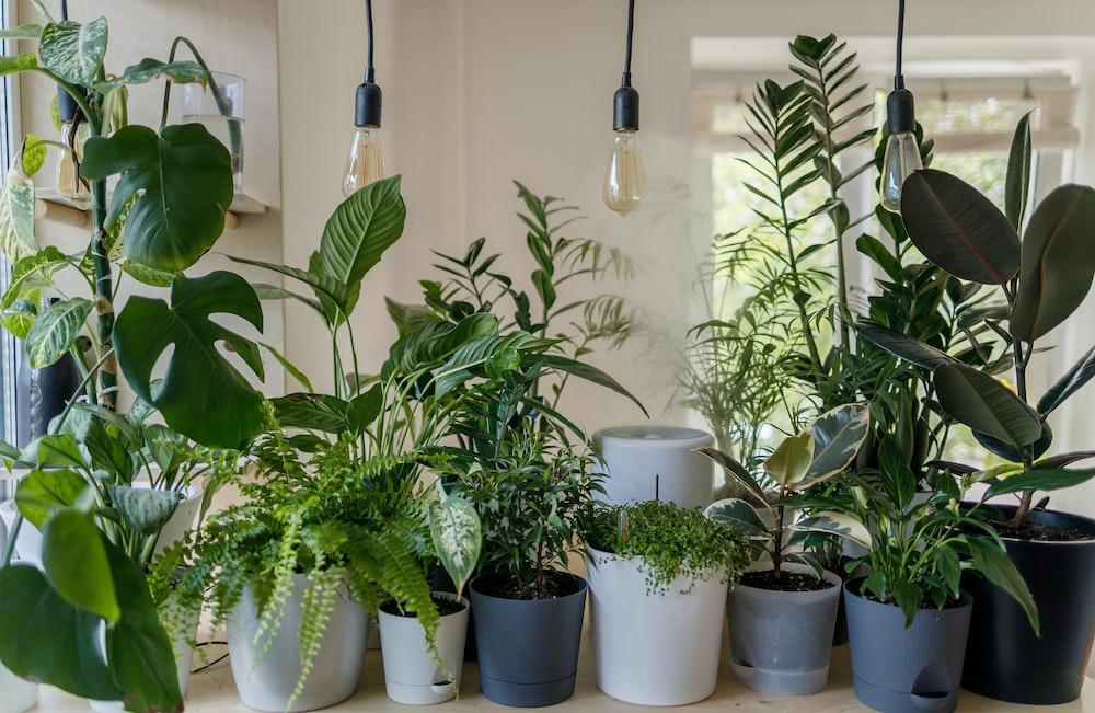 green plant in white ceramic pot
