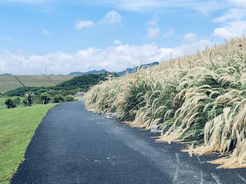 green grass field beside gray asphalt road under blue sky during daytime