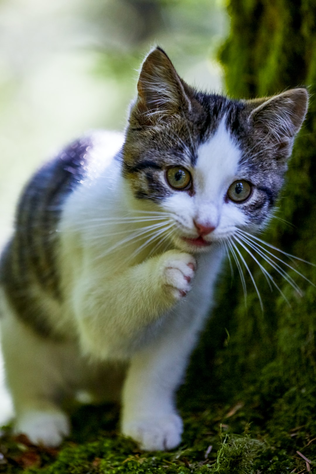 the beautiful young cat in the moss