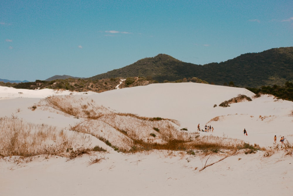 brown grass on white sand during daytime