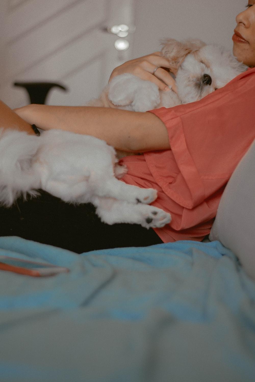 white short coated small sized dog lying on blue textile