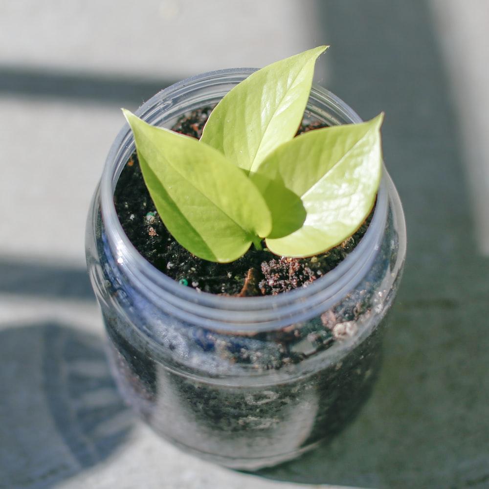 green plant in blue glass jar