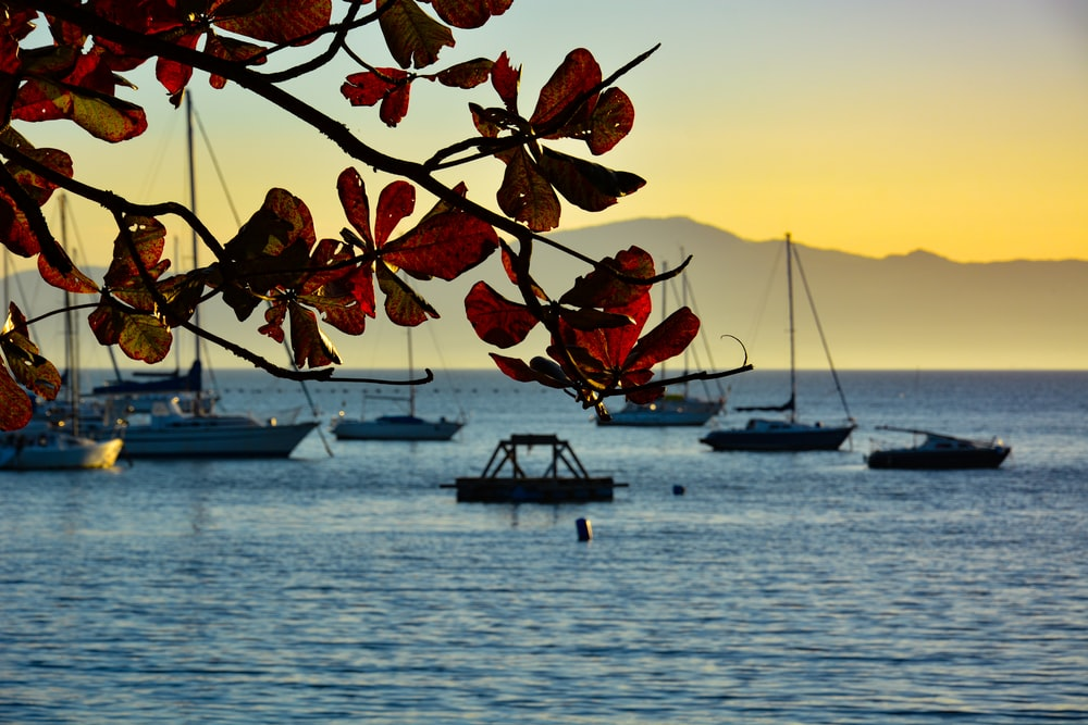 brown leaves on brown wooden boat on sea during sunset