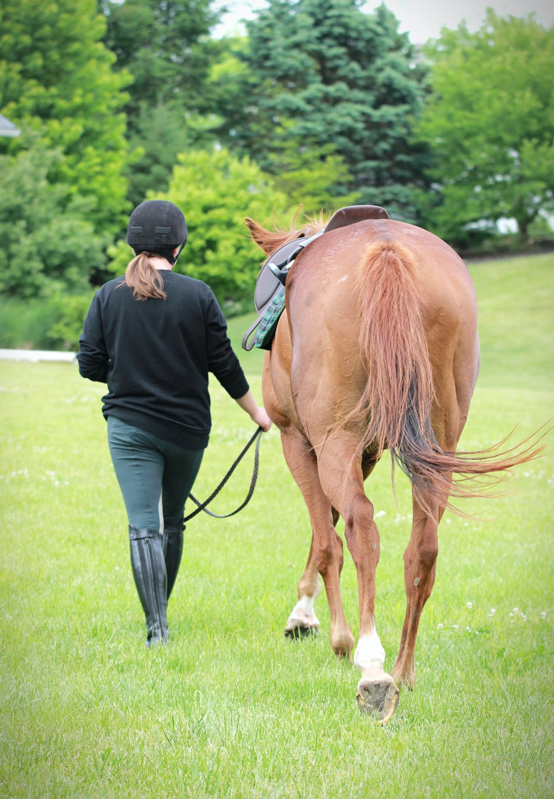 A girl walks next to a brown thoroughbred horse.