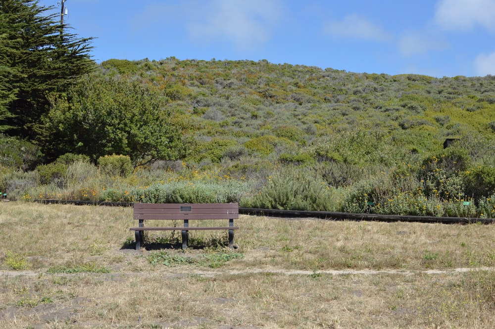 brown wooden bench on green grass field during daytime