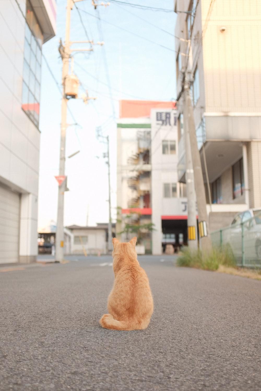 orange tabby cat on gray asphalt road during daytime