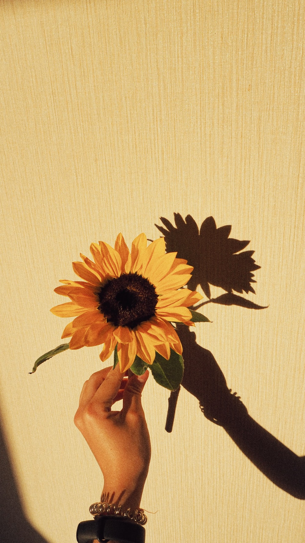 person holding sunflower in front of white wall