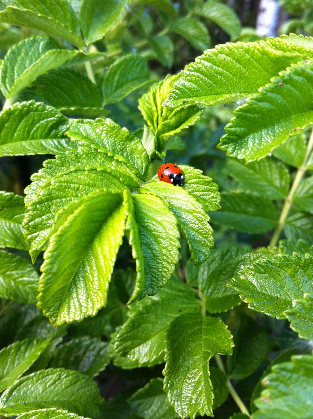 red ladybug on green leaf plant